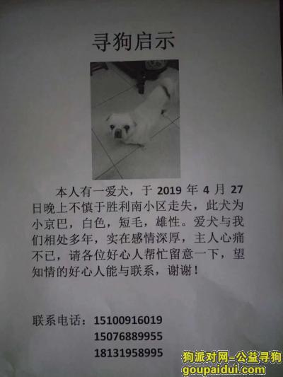 ,寻狗启示 一条白色小京巴狗于四月二十七日在胜利小区附近走丢,它是一只非常可爱的宠物狗狗,希望它早日回家,不要变成流浪狗。