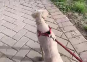 寻狗启示,泰迪狗狗走丢了好着急,它是一只非常可爱的宠物狗狗,希望它早日回家,不要变成流浪狗。