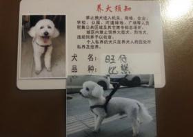 寻狗启示,4月28日西宁城西区气象巷,丢失一条比熊,白色短毛,后腿屁股上有一片胎记,跑掉的时候什么也没戴。麻烦各位有消息的联系我,十分感谢,QQ1104937035,它是一只非常可爱的宠物狗狗,希望它早日回家,不要变成流浪狗。