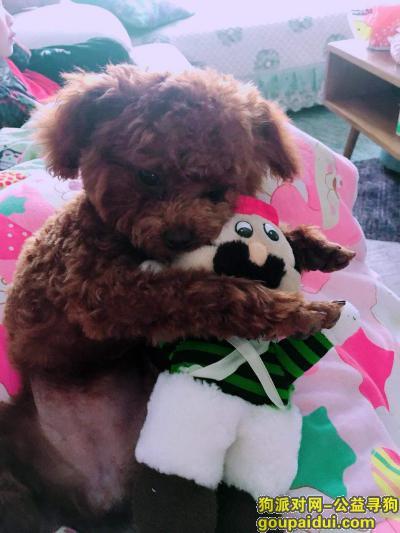 资阳寻狗网,资阳雁江寻狗启示重酬急急,它是一只非常可爱的宠物狗狗,希望它早日回家,不要变成流浪狗。