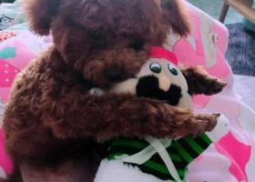 寻狗启示,资阳雁江寻狗启示重酬急急,它是一只非常可爱的宠物狗狗,希望它早日回家,不要变成流浪狗。