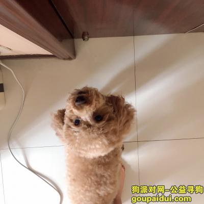 大同找狗,无论多长时间我都等你回来,它是一只非常可爱的宠物狗狗,希望它早日回家,不要变成流浪狗。