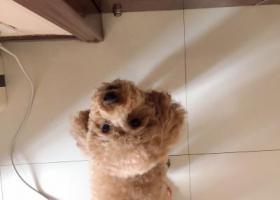 寻狗启示,无论多长时间我都等你回来,它是一只非常可爱的宠物狗狗,希望它早日回家,不要变成流浪狗。