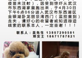寻狗启示,我家狗狗一一可乐于4月30日下午6点多钟走失,它是一只非常可爱的宠物狗狗,希望它早日回家,不要变成流浪狗。