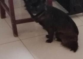 寻狗启示,盐城市建湖县西塘河大桥桥东寻找中华田园犬,它是一只非常可爱的宠物狗狗,希望它早日回家,不要变成流浪狗。