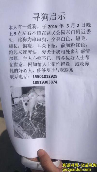 阜新丢狗,自己串串狗5月2日走失,求大家帮忙,它是一只非常可爱的宠物狗狗,希望它早日回家,不要变成流浪狗。