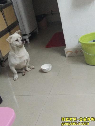 ,寻找狗狗主人......,它是一只非常可爱的宠物狗狗,希望它早日回家,不要变成流浪狗。