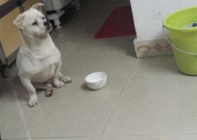 寻狗启示,寻找狗狗主人......,它是一只非常可爱的宠物狗狗,希望它早日回家,不要变成流浪狗。