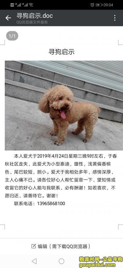 淮北丢狗,急寻爱犬,浅黄色,尾巴较短,它是一只非常可爱的宠物狗狗,希望它早日回家,不要变成流浪狗。