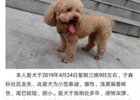 寻狗启示,急寻爱犬,浅黄色,尾巴较短,它是一只非常可爱的宠物狗狗,希望它早日回家,不要变成流浪狗。