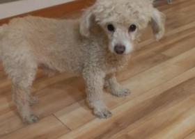 寻狗启示,在庙前街捡到狗狗,寻找狗主人,它是一只非常可爱的宠物狗狗,希望它早日回家,不要变成流浪狗。