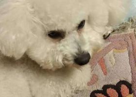 寻狗启示,上午11点在文化桥丢失,它是一只非常可爱的宠物狗狗,希望它早日回家,不要变成流浪狗。