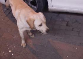 寻狗启示,寻找狗狗????的主人,看到联系我,它是一只非常可爱的宠物狗狗,希望它早日回家,不要变成流浪狗。