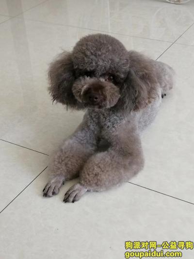 承德寻狗网,狗已找到,感谢!感谢!,它是一只非常可爱的宠物狗狗,希望它早日回家,不要变成流浪狗。