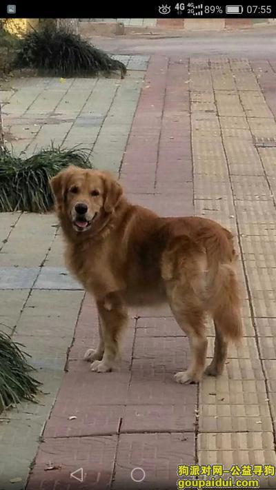 连云港找狗,家里养了8年的金毛丢了,它是一只非常可爱的宠物狗狗,希望它早日回家,不要变成流浪狗。