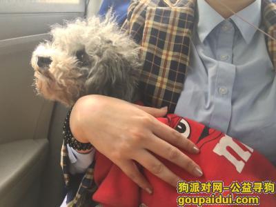 ,汉台区中山街附近丢失一只灰色泰迪右腿畸形,身穿红色M豆衣服,它是一只非常可爱的宠物狗狗,希望它早日回家,不要变成流浪狗。