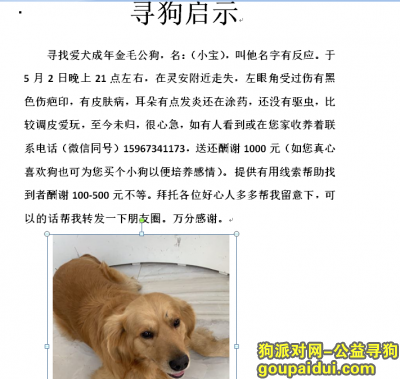 嘉兴寻狗启示,桐乡寻找丢失成年金毛公,酬谢一千,它是一只非常可爱的宠物狗狗,希望它早日回家,不要变成流浪狗。