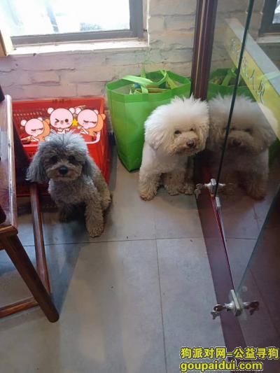 【合肥捡到狗】,大蜀山森林公园北门环山路半边街捡到两只狗,它是一只非常可爱的宠物狗狗,希望它早日回家,不要变成流浪狗。