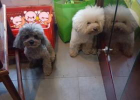 寻狗启示,大蜀山森林公园北门环山路半边街捡到两只狗,它是一只非常可爱的宠物狗狗,希望它早日回家,不要变成流浪狗。