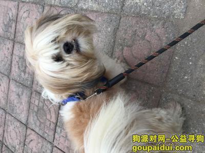 ,2019年1月下旬在济宁人民公园粉莲街马驿桥小区丢失6岁母西施狗,希望好心人士找到寻到狗以2000元作为答谢!,它是一只非常可爱的宠物狗狗,希望它早日回家,不要变成流浪狗。