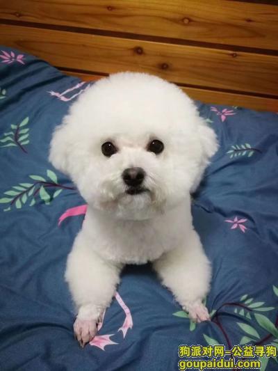 信阳找狗,信阳寻狗,狗狗丢失望寻,它是一只非常可爱的宠物狗狗,希望它早日回家,不要变成流浪狗。