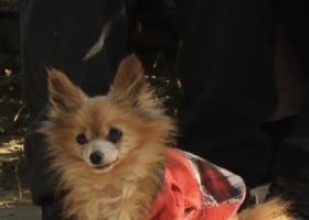 寻狗启示,东光小区找狗狗 感谢3000元,它是一只非常可爱的宠物狗狗,希望它早日回家,不要变成流浪狗。