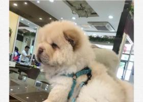寻狗启示,重金寻狗 告知必有重谢,它是一只非常可爱的宠物狗狗,希望它早日回家,不要变成流浪狗。