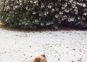 寻狗启示,寻找爱犬断尾小八哥丑丑,它是一只非常可爱的宠物狗狗,希望它早日回家,不要变成流浪狗。