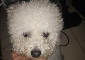 寻狗启示,今早在市民中心新业路捡狗一只,它是一只非常可爱的宠物狗狗,希望它早日回家,不要变成流浪狗。