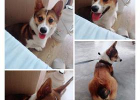 寻狗启示,台州椒江永宁南苑寻狗启示,它是一只非常可爱的宠物狗狗,希望它早日回家,不要变成流浪狗。