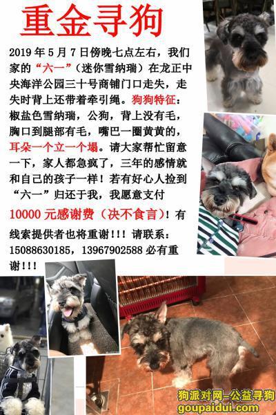 ,重金寻狗:狗狗走失六天了,如有好心人找到狗愿支付10000元感谢费,它是一只非常可爱的宠物狗狗,希望它早日回家,不要变成流浪狗。