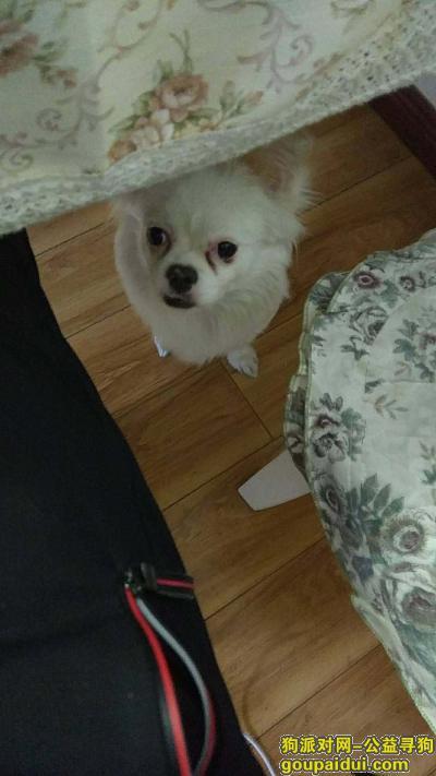 ,求助  新曹路公园世家丢失小白狗一只,求好心人提供帮助,它是一只非常可爱的宠物狗狗,希望它早日回家,不要变成流浪狗。