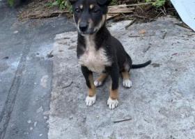 寻狗启示,捡到一只黑色小土土,找一个靠谱的家庭领养,它是一只非常可爱的宠物狗狗,希望它早日回家,不要变成流浪狗。
