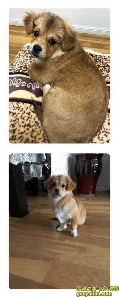 新乡寻狗启示,不爱请不要伤害 望爱犬早日回家,它是一只非常可爱的宠物狗狗,希望它早日回家,不要变成流浪狗。