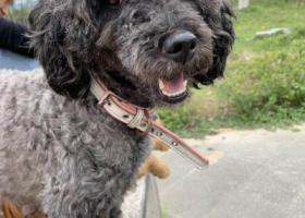 寻狗启示,帮小奶狗寻找狗妈妈。,它是一只非常可爱的宠物狗狗,希望它早日回家,不要变成流浪狗。