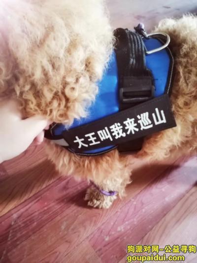 扬州找狗,跪求好心人提供狗狗消息  必有感谢,它是一只非常可爱的宠物狗狗,希望它早日回家,不要变成流浪狗。