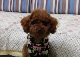 寻狗启示,我家狗狗5月14日在家附近走失,望好心人如寻获,请联系我们13551387128,万分感谢,它是一只非常可爱的宠物狗狗,希望它早日回家,不要变成流浪狗。