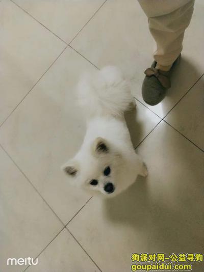 临汾找狗,寻狗启示,山西省临汾市尧都区木材巷,它是一只非常可爱的宠物狗狗,希望它早日回家,不要变成流浪狗。