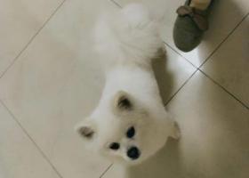 寻狗启示,寻狗启示,山西省临汾市尧都区木材巷,它是一只非常可爱的宠物狗狗,希望它早日回家,不要变成流浪狗。