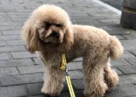寻狗启示,杭州三坝谁丢的狗,在古墩路上,它是一只非常可爱的宠物狗狗,希望它早日回家,不要变成流浪狗。