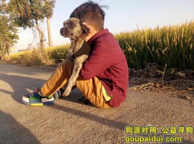 扬州寻狗,这只狗叫毛豆走丢了求帮忙,它是一只非常可爱的宠物狗狗,希望它早日回家,不要变成流浪狗。