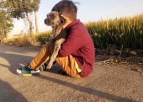 寻狗启示,这只狗叫毛豆走丢了求帮忙,它是一只非常可爱的宠物狗狗,希望它早日回家,不要变成流浪狗。