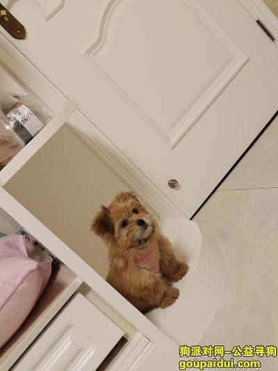 周口寻狗,周口川汇区找狗狗。急急急!!!,它是一只非常可爱的宠物狗狗,希望它早日回家,不要变成流浪狗。