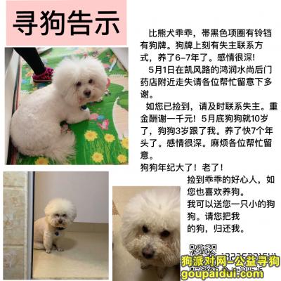 桂林找狗,广西省桂林市寻爱宠告示,它是一只非常可爱的宠物狗狗,希望它早日回家,不要变成流浪狗。