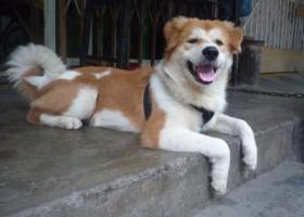 寻狗启示,好想你快回来好不好?,它是一只非常可爱的宠物狗狗,希望它早日回家,不要变成流浪狗。
