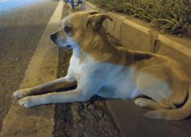 寻狗启示,彩云北路与赵溪村大桥交汇处有一只狗狗迷路了,它是一只非常可爱的宠物狗狗,希望它早日回家,不要变成流浪狗。
