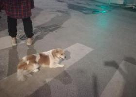 看见一只流浪的花色小狗