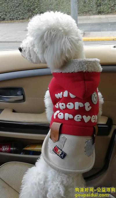 南充寻狗启示,小白,你在哪里,三个月了,依然忘不了你的啥样?,它是一只非常可爱的宠物狗狗,希望它早日回家,不要变成流浪狗。