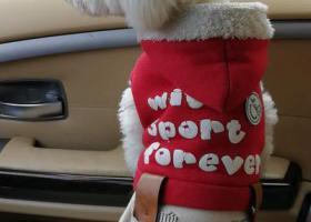 寻狗启示,小白,你在哪里,三个月了,依然忘不了你的啥样?,它是一只非常可爱的宠物狗狗,希望它早日回家,不要变成流浪狗。