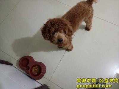 岳阳寻狗,寻找南湖千亩湖丢失的宠物狗泰迪,它是一只非常可爱的宠物狗狗,希望它早日回家,不要变成流浪狗。